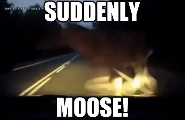 suddenly moose