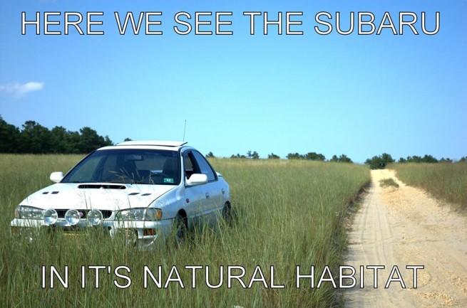 Subaru in habitat